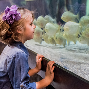 Child looking in fish tank